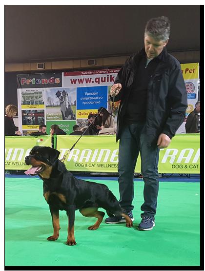 Samy von der Hundehutte rottweiler show results