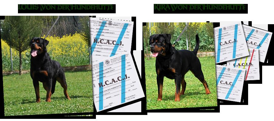 Louis von der Hundehutte and Kira von der Hundehutte rottweiler show results
