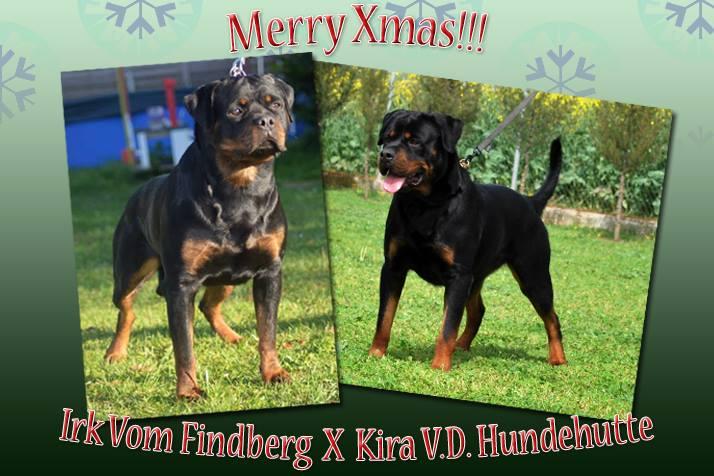Kira von der Hundehutte x Irk von Findberg Litter announcement